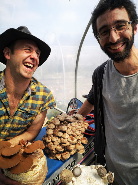 Marvellous Mushrooms
