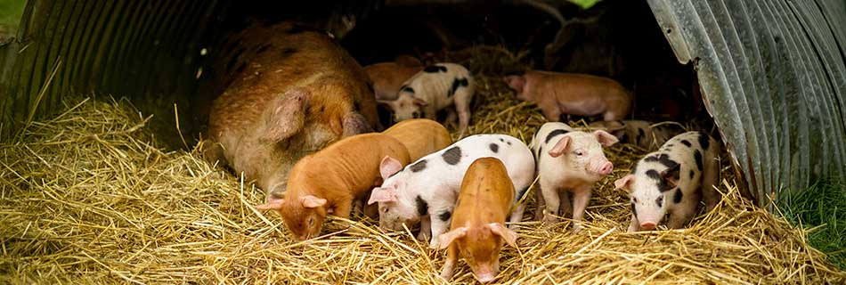 Organic September Heroes: Adeys Farm
