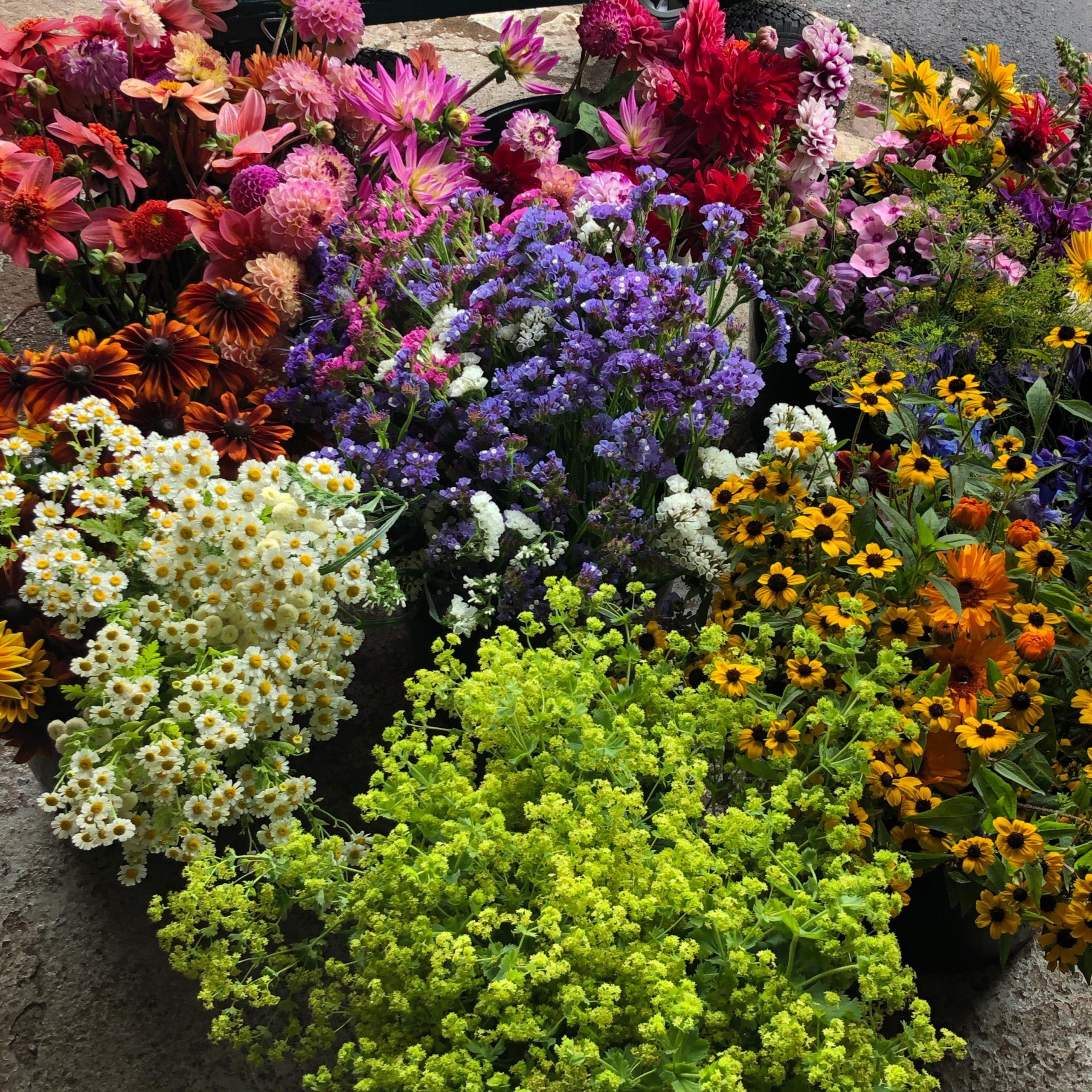 Keeds Farm Flowers