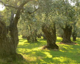 Why farming has to change: lessons from Abruzzo