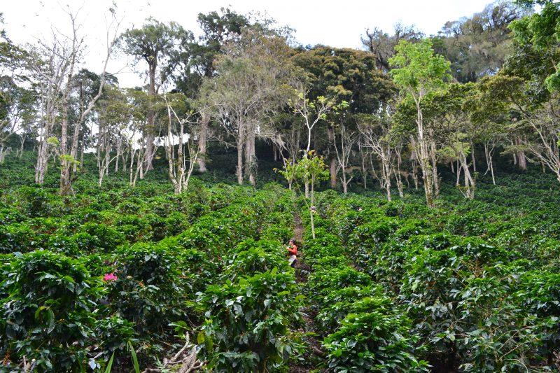 A fair and organic break this Fairtrade Fortnight