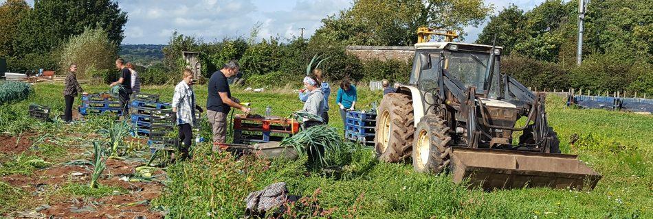 Innovator Story: The Community Farm's Head Grower John English