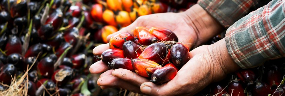 We're rethinking palm oil… should you?