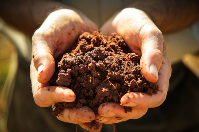Human matters: how we should think of food from the soil up, not the plate down